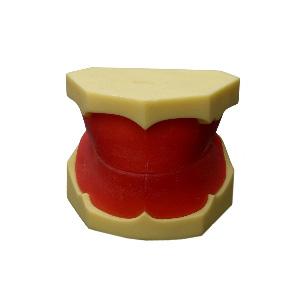 全口牙体结构图